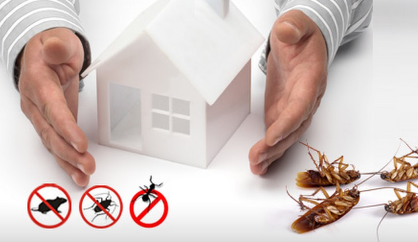 What Factors To Consider While Hiring An Exterminator For Your Home